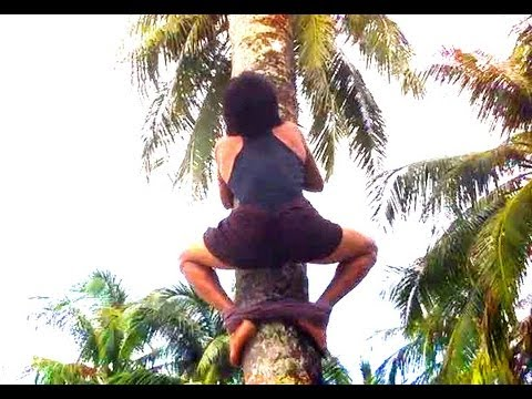 HOW TO CLIMB COCONUT TREE EASY DAISY? (and grab coconuts)
