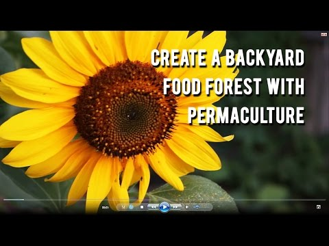 Free Introduction Into Permaculture