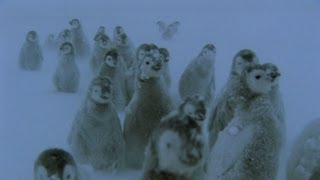 Penguins Lost in a Blizzard