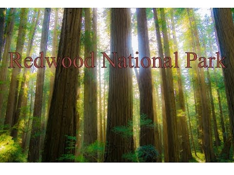 Redwood National Park - Sony HD - Glidecam HD 4000