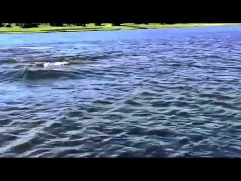 Mặt Hồ Đang Yên Ả Thì Bất Ngờ Nó…xuất Hiện. Cái Kết Hết Hồn