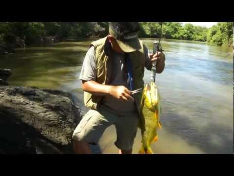 Pesca de Dourados com Iscas Artificiais - Rio Miranda