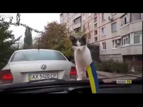 Кот познает автомобиль, приколы с котами