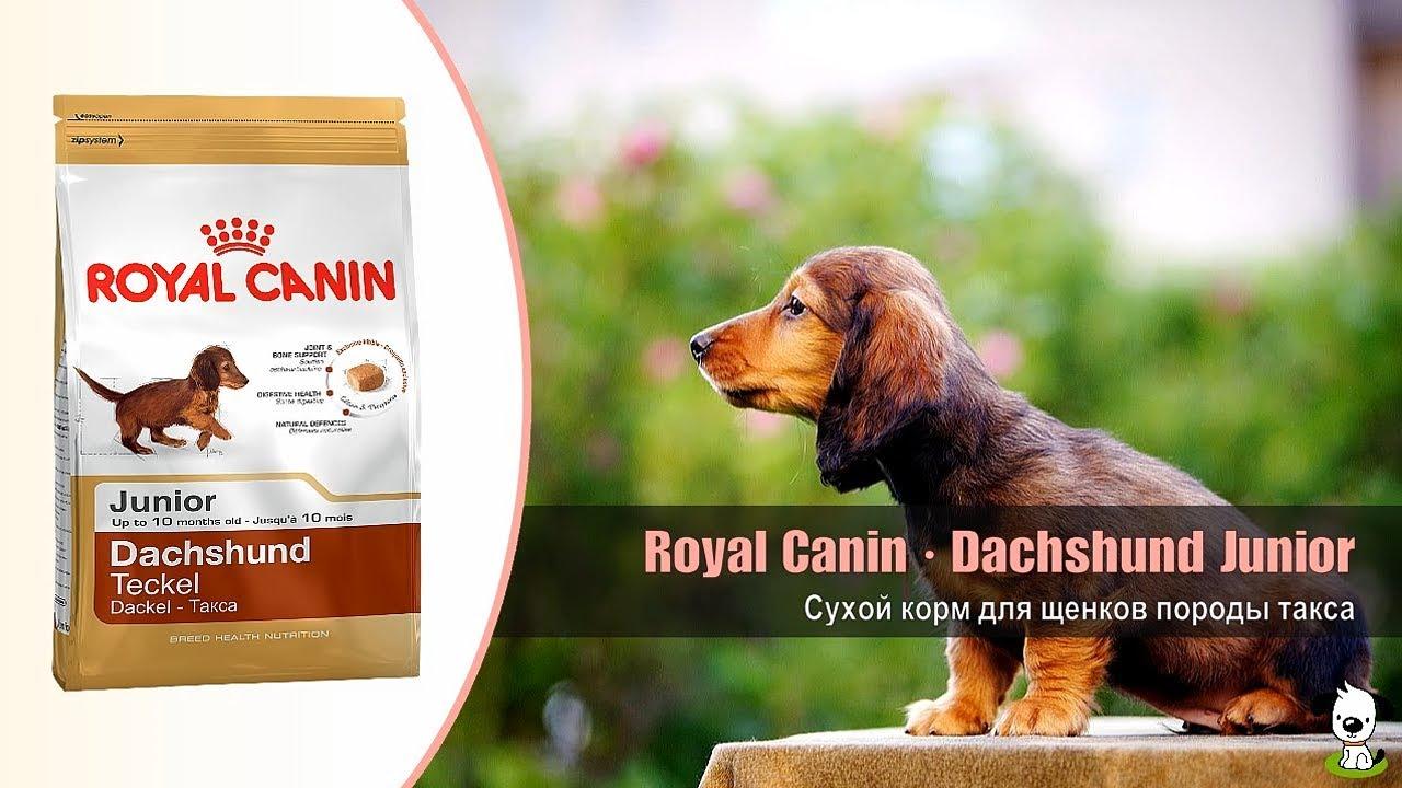 Корм консервированный для собак - актуальная цена на