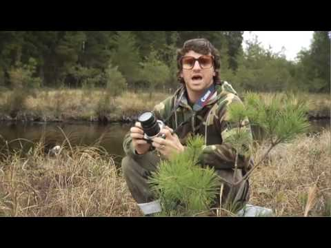 Extreme Birdwatching