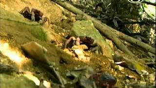 Zvierací rekordmani - Roje