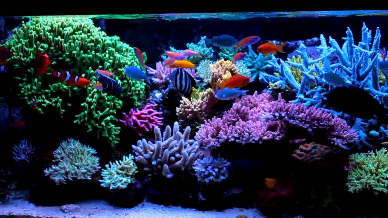 Krzysztof Tryc 39 S Reef Tank System With Np Reducing