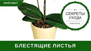 Как сделать листья орхидеи