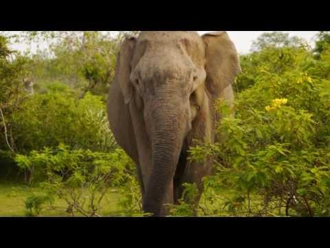 Sri Lanka - Safari Park Narodowy Yala