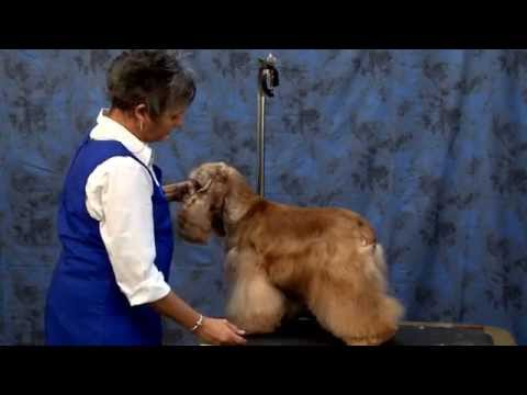 Grooming the American Cocker Spaniel with Judy Hudson