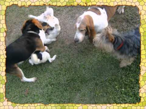 Hotel de perros en Panamá - MASCOTA RESORT
