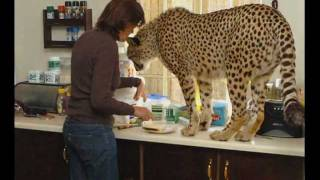 Woman Who Lives With Lions,Tigers and Cheetahs!