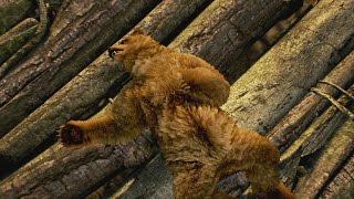TEKKEN 7 - Kuma és Panda Reveal Trailer