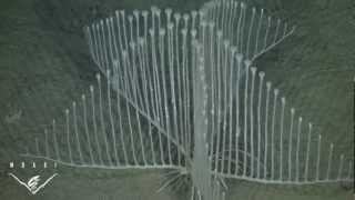 Harp-Shaped Carnivorous Sponge
