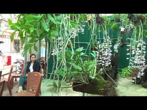 Thăm vườn lan phi điệp đẹp và tìm hiểu thêm về cách bón cho lan - Beautiful orchids