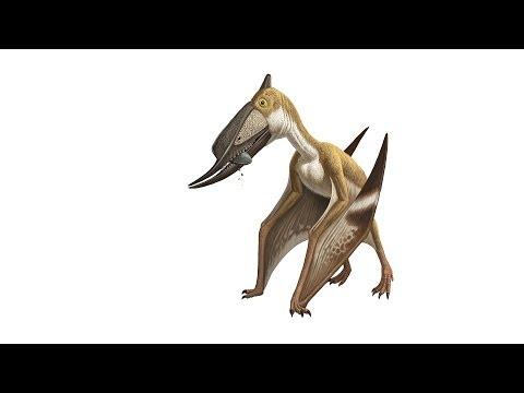 What Is a Pterosaur?