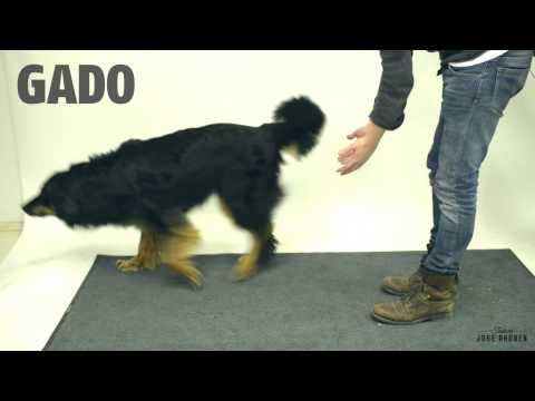 Magic for dogs - Magia para Perros