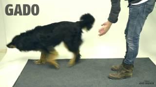 Anjing ini kebigungan dengan trik sulap yang dilakukan pria ini