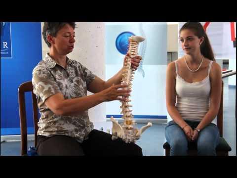 Aufbau des Muskel-Skelettsystems