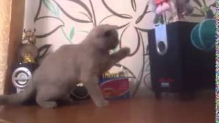 The Bass Drops And Cat Tries To Catch It