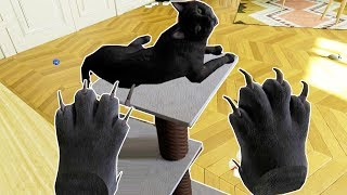 WHAT IT'S LIKE TO BE A CAT IN VR! - Catify VR Gameplay HTC VIVE