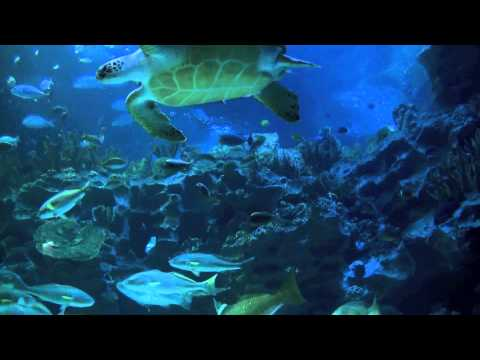 Aquarium 2hr  relax music