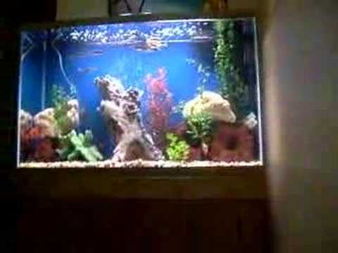 Shakes 50 Gallon High Fish Tank Youtube