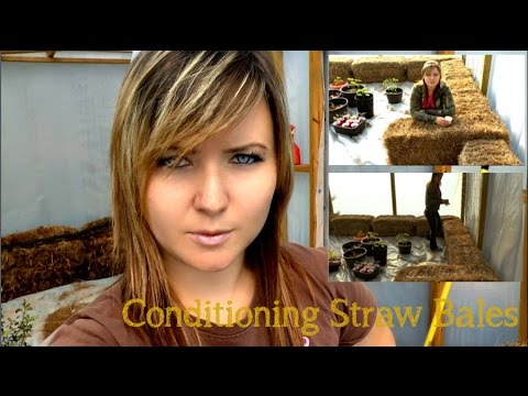 Straw Bale Gardening - Conditioning the Bale