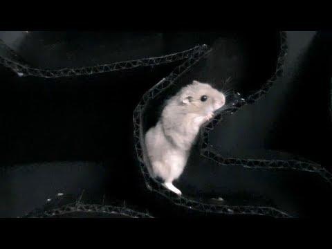 My Funny Pet Hamster in Black Snake-shaped Maze