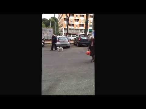 image vidéo un mamie qui jongle