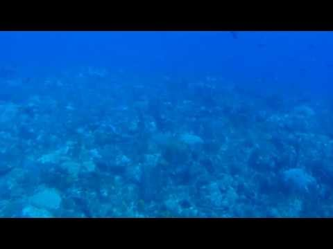 Submarine Exploration of Coral Reefs in the Caribbean