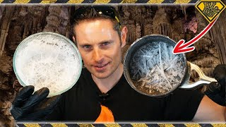 Growing NITRATE Crystals For Gunpowder
