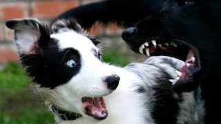 Perros graciosos y tiernos
