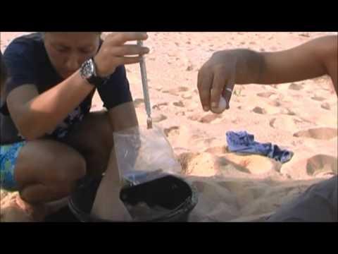Thailand Sea Turtle Conservation