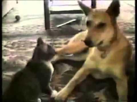 vídeo de risa de perros y gatos