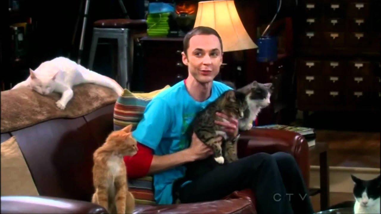шелдон с кошками фото