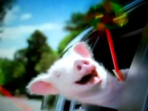 The Geico commercial-Piggy