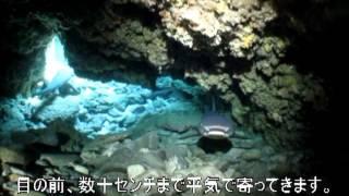 ネムリブカが集まる洞窟