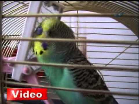 Ak Partili muhabbet kuşu - Gazete32