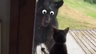 Gangsta Cats Video Compilation 2016