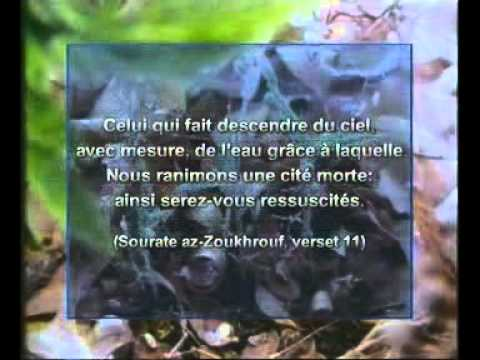 Arte documentaire Islam Les miracles scientifiques du coran