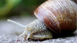 True Facts About The Land Snail