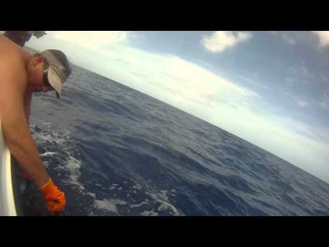 Go-Pro Capture Blue Marlin Revive / Release