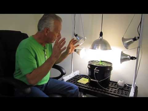 How to set-up a CFL Compact Floresent Lighting rig for growing in hydroponics or soil.