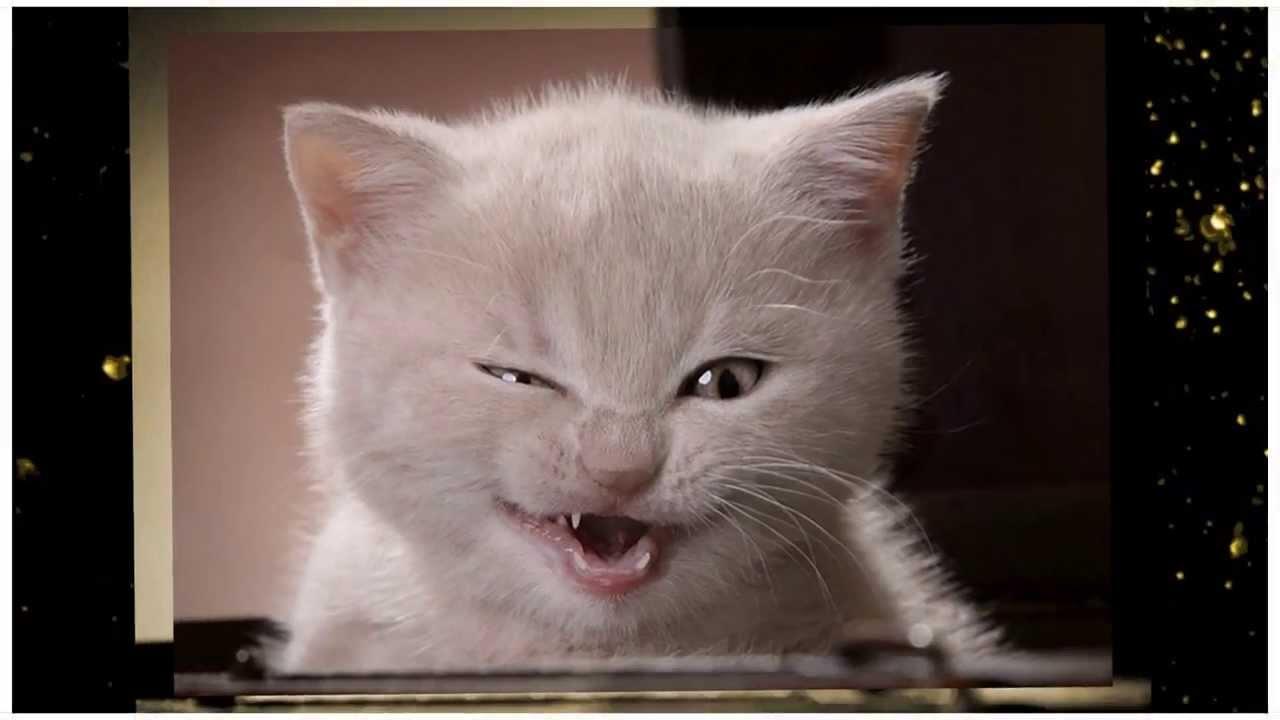 youtube video funny animals jpg