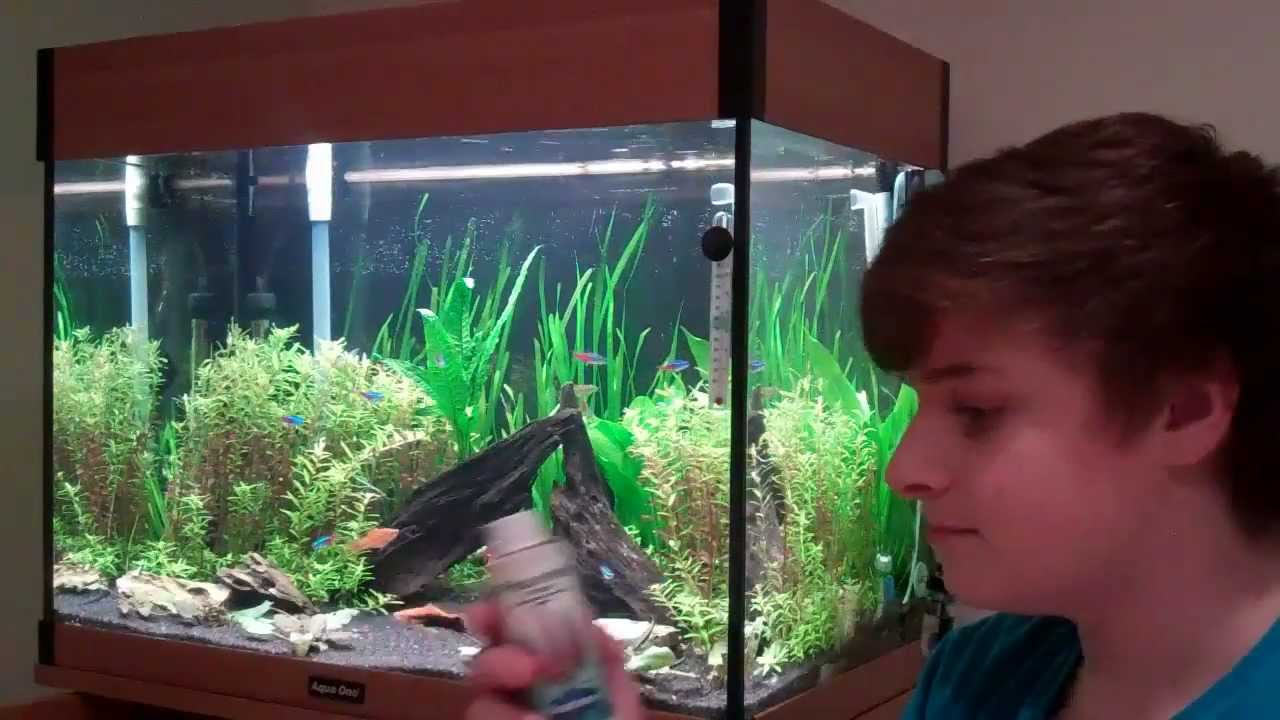 How to keep aquatic plants beginners guide to aquariums for Beginner fish tank
