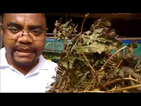 Banhos de ervas para o amor dinheiro e saúde  - Pai Francisco Borges no Mercado do Pari em São Paulo
