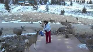 Loads Of Deer Flock To This Lady's Front Yard