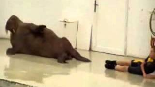 Excuses Not To Exercise FAIL: Walrus Exercising