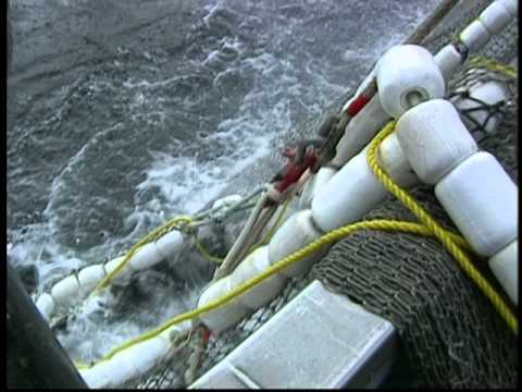 The Southeast Alaska Salmon Industry